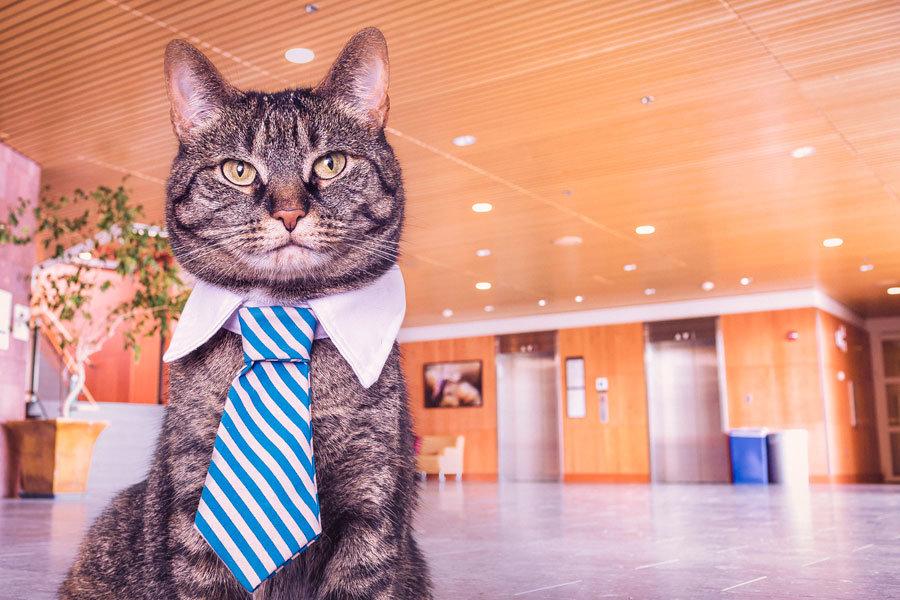 ビジネス猫